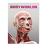 BODY WORLDS - The Original Exhibition (English)