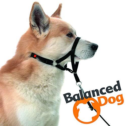 Balanced Dog Erziehungsgeschirr SCHWARZ - S | Halti | Halfter