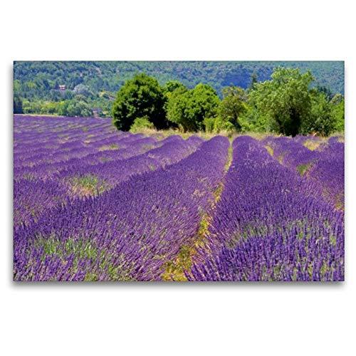 Calvendo Premium Textil-Leinwand 120 cm x 80 cm quer, Lavendelfeld | Wandbild, Bild auf Keilrahmen, Fertigbild auf echter Leinwand, Leinwanddruck: in der Provence Orte Orte