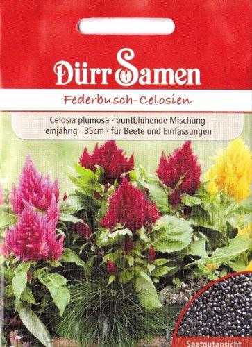 Federbusch Celosien, Celosia plumosa, ca. 120 Samen