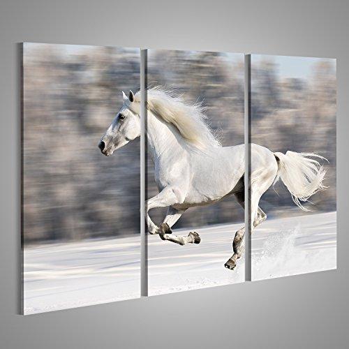 Quadro moderno cavallo Stampa su tela -