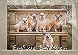 Englische Bulldoggen (Wandkalender 2020 DIN A4 quer): Schnuten zum verlieben - Englische Bulldoggen (Monatskalender, 14 Seiten ) (CALVENDO Tiere)