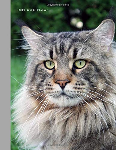 2019 Weekly Planner: Tabby Maine Coon Cat Large Size 8.5 x 11 Organizer Diary with Goal Setting & Gratitude Sections (Nature and Animals, Band 5)