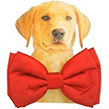 Lana Paws Quirky and Cool Dog Bow Tie with Adjustable Strap (Crimson Red)