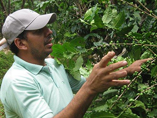 Madre Tierra Urwald Kaffee Farm