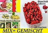 100x Gigantesco Bosque Fresa Mezclada Mix (dulce sabor) Planta Rareza comestible Semillas Fruta #124