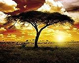 1art1 Afrique Poster Reproduction - Coucher De Soleil, Acacia dans La Savane (50 x 40 cm)