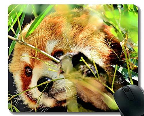 Yanteng Gaming Mouse Pad mit genähtem Rand, Schule Netter Panda, Kleiner Panda, Makro, Mouse Mat, Rutschfeste Gummibasis Mousepad für Laptop, Computer -