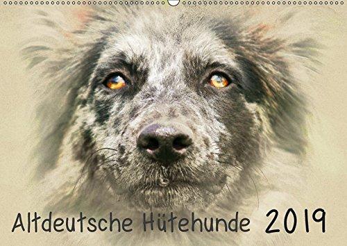 Altdeutsche Hütehunde 2019 (Wandkalender 2019 DIN A2 quer): Altdeutsche Hütehunde im kunstvollen...