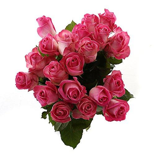 Choice of Green - 1 bouquet de bonbons à la rose Avalanche Large - 20 tiges - Hauteur ? 60 cm -