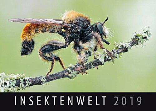 Insektenwelt 2019: Wandkalender