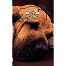 agenda 2016 susana escarabajal - Amazon.es