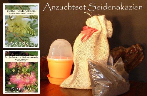 Seedeo kit de culture de seidenakazien rond
