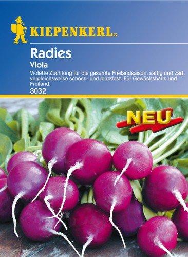 Sperli Gemüsesamen Radieschen Viola, grün