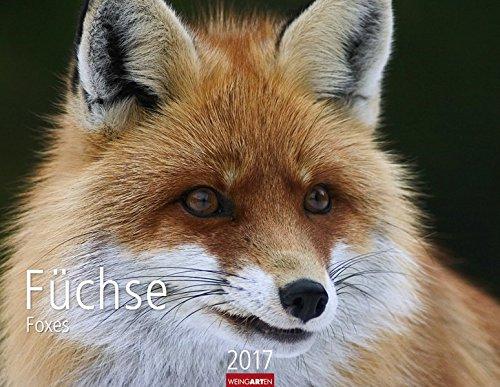 fuchse-kalender-2017