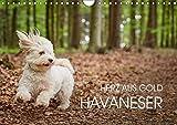 Havaneser - Herz aus Gold (Wandkalender 2018 DIN A4 quer): Havaneser Monatskalender. Ein Jahr mit dem Hund mit dem Herzen aus Gold (Monatskalender, 14 ... Tiere) [Kalender] [Apr 04, 2017] Mayer, Peter