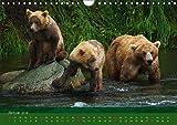 Der Bärenkalender 2018 CH-Version (Wandkalender 2018 DIN A4 quer): Grizzlybären - ein Fotoshooting der besonderen Art (Monatskalender, 14 Seiten ) ... [Kalender] [Apr 01, 2017] Steinwald, Max - Max Steinwald