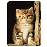 Furry Cute Innocent Kitten Sat in Barn Premium Quality Thick Rubber Mouse Mat Pad Soft Comfort