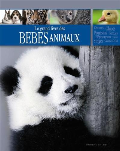 Bébés animaux
