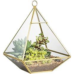 Geometrisches Terrarium aus Glas, auch für Sukkulenten