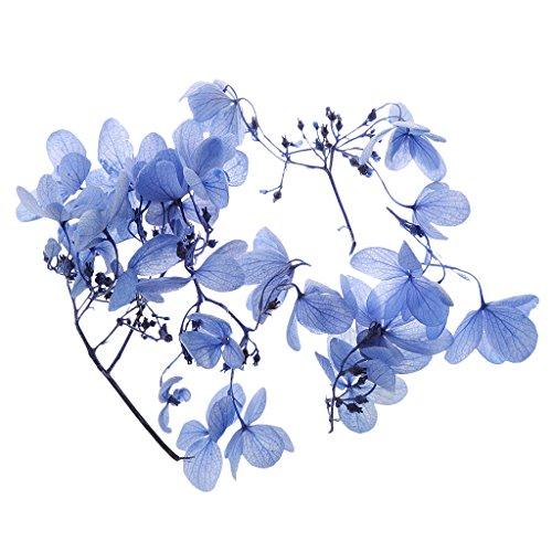 caja-de-regalo-de-flores-frescas-preservada-secada-florece-el-bricolaje-decprations-5g-violeta