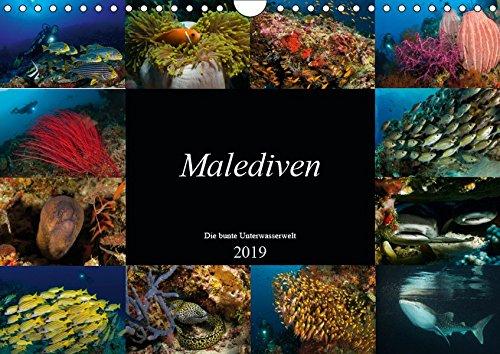 Malediven - Die bunte Unterwasserwelt (Wandkalender 2019 DIN A4 quer): Tauchen Sie ein in eine bezaubernde Unterwasserwelt (Monatskalender, 14 Seiten ) (CALVENDO Natur)