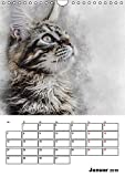 Maine Coon Katzen (Wandkalender 2019 DIN A4 hoch): Eine der größten Katzen der Welt: Maine-Coon (Planer, 14 Seiten ) (CALVENDO Tiere)