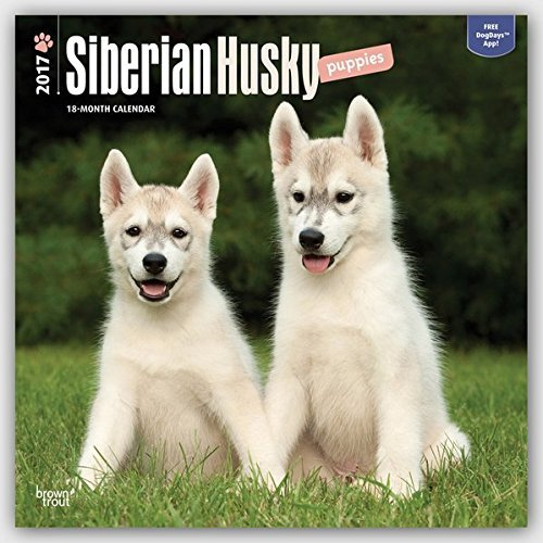 SIBERIAN HUSKY PUPPIES 2017 UK SQUARE WALL CALENDAR BRAND NEW & FACTORY SEALED BY BROWN TROUT