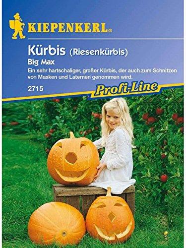 Kiepenkerl Kürbis Big Max