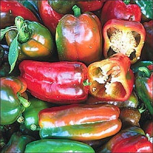 Napoléon douce Bio Poivrons Heirloom Jardin non-OGM Graines de légumes