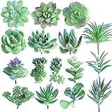 FEPITO 16 Pz Formato casuale Piante succulente artificiali piante grasse non annate raccoglie piante succulente finte in steli verdi per la decorazione domestica giardino interno