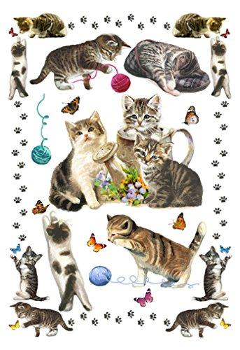 s ', 12-Papier, 15 x 21 cm, Waffelpiqué, Transferdruck, Motiv Katzen, verschiedene Farben