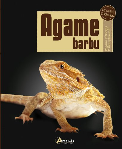 Agame barbu : Pogona vitticeps P. henrylawsoni