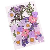 Wildlead Gepresste Blume Gemischte Organische natürliche getrocknete Blumen DIY Art Floral Dekore Collection Geschenk