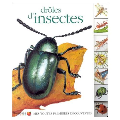 Drôles d'insectes