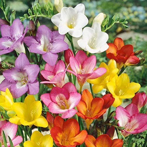 Zoom IMG-2 kisshes giardino miscela di semi
