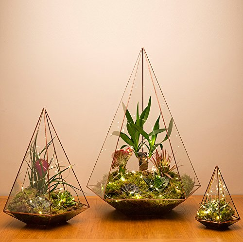 'Urban Botanist Kupfer Mega Terrarium Perle, mit Live-Succulent Pflanzen, 3 x Terrarium with live plants and LED lights