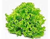 #5: AllThatGrows Lettuce Seeds, Green Leaf Lettuce Salad Seeds Pack of 1000 Seeds