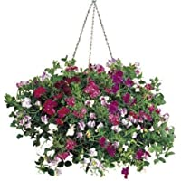 ScoutSeed Suttons Seeds Sweet Pea Sweetie Mix