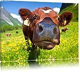 Süße Alpen Kuh auf Bergwiese Format: 80x60 auf Leinwand, XXL riesige Bilder fertig gerahmt mit Keilrahmen, Kunstdruck auf Wandbild mit Rahmen, günstiger als Gemälde oder Ölbild, kein Poster oder Plakat