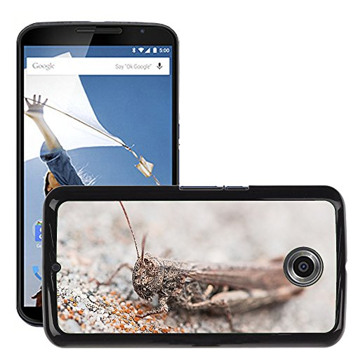 Hülle Case Schutzhülle Cover Premium Case // M00127115 Heuschrecke Tier Insekt Grau Stein // LG Google Nexus 6 (Heuschrecken Stein)