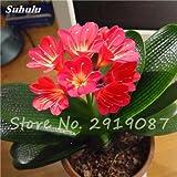 Semillas Clivia exóticas plantas en maceta de bricolaje, de interior del pote de semillas múltiples colores para elegir el Bonsai planta para Hogar y jardín Decoración 100 Pcs 11