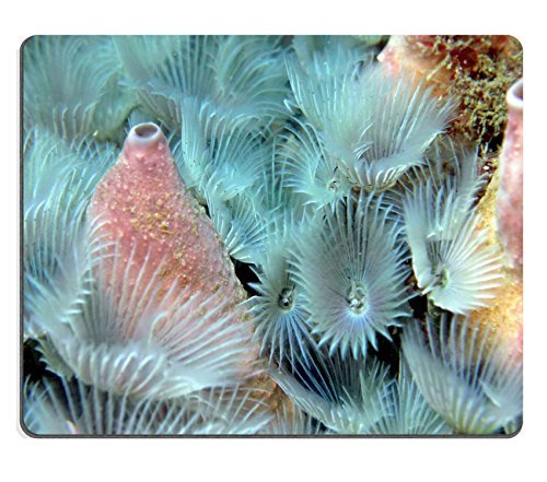 jun-xt-souris-en-caoutchouc-naturel-image-didentit-21560747tirelire-cochon-tirelire-dtails-dune-argi