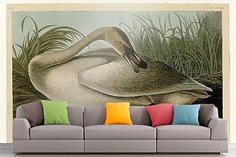 Roshni Arts®–curated Art Mural–Audubon–Cygne trompette _ Plaque–376en vinyle autocollant |