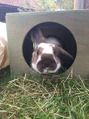Hop Inn Rabbit Hide House (Sage) LARGE Indoor or Outdoor, Cat Hide, for Big Rabbits and Cats too, READY MADE and Built… 6