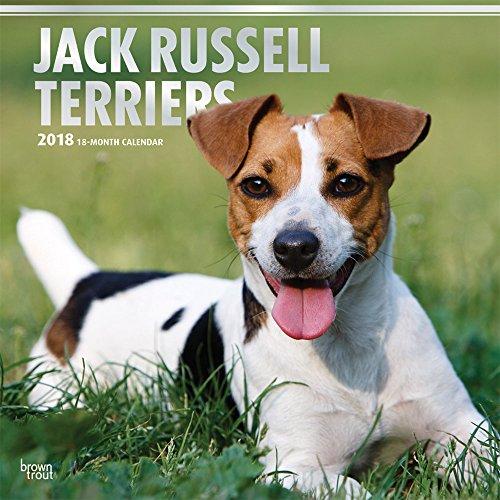 Jack Russell Terriers 2018 Wall Calendar