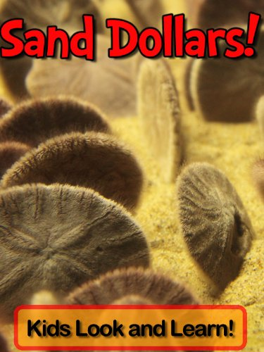 Sand Dollars! Learn About Sand Dollars and Enjoy Colorful Pictures - Look and Learn! (50+ Photos of Sand Dollars) (English Edition)
