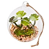 Sukkulente Mini Kunstpflanze Deko Kugel Anhänger Glas grün (Design 1)