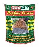 Gazon Perfect grass