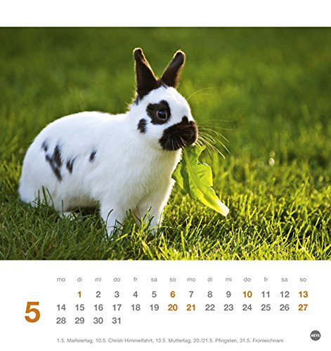 Kaninchen Postkartenkalender – Kalender 2018 - 6